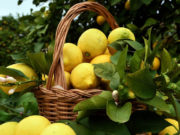 Limoni di Siracusa